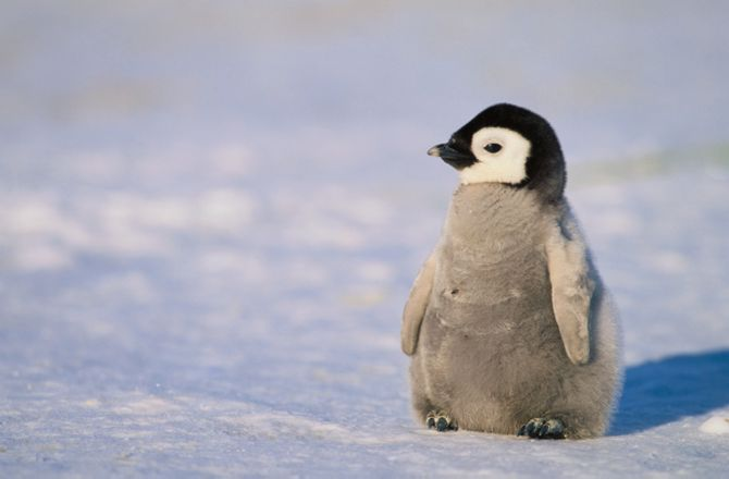Penguin search engine