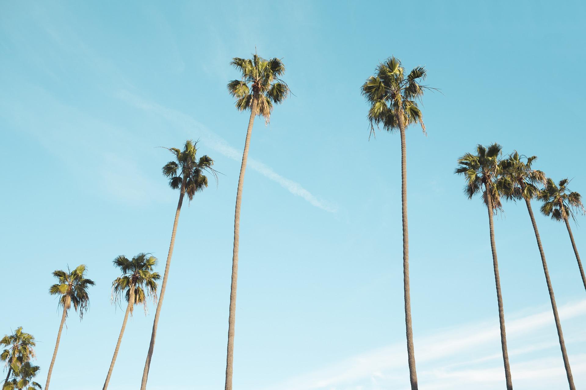 4 Reasons to Hire a Los Angeles SEO Company